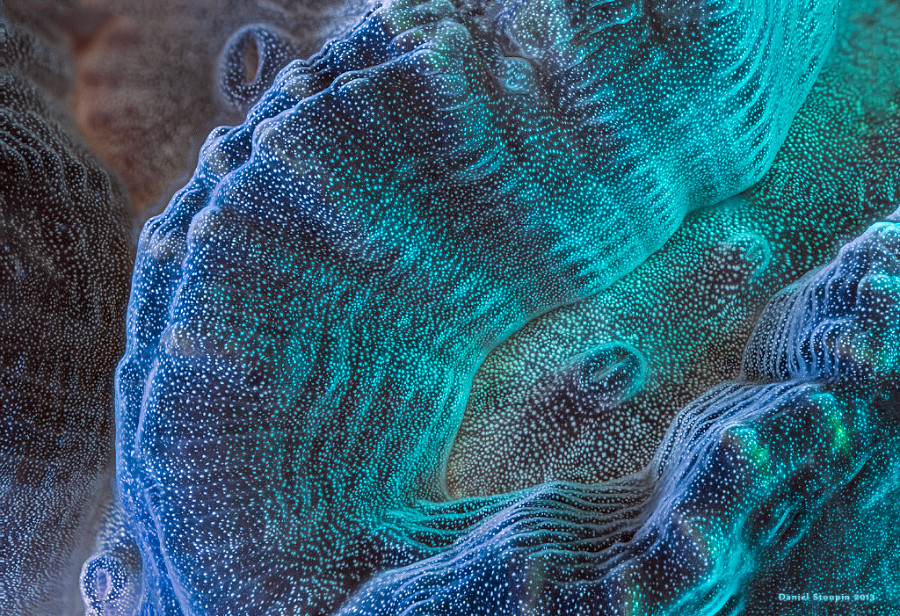 A maze coral under full-spectrum light magnified. All those details are totally invisible without some ultra-macro work involving stacking.