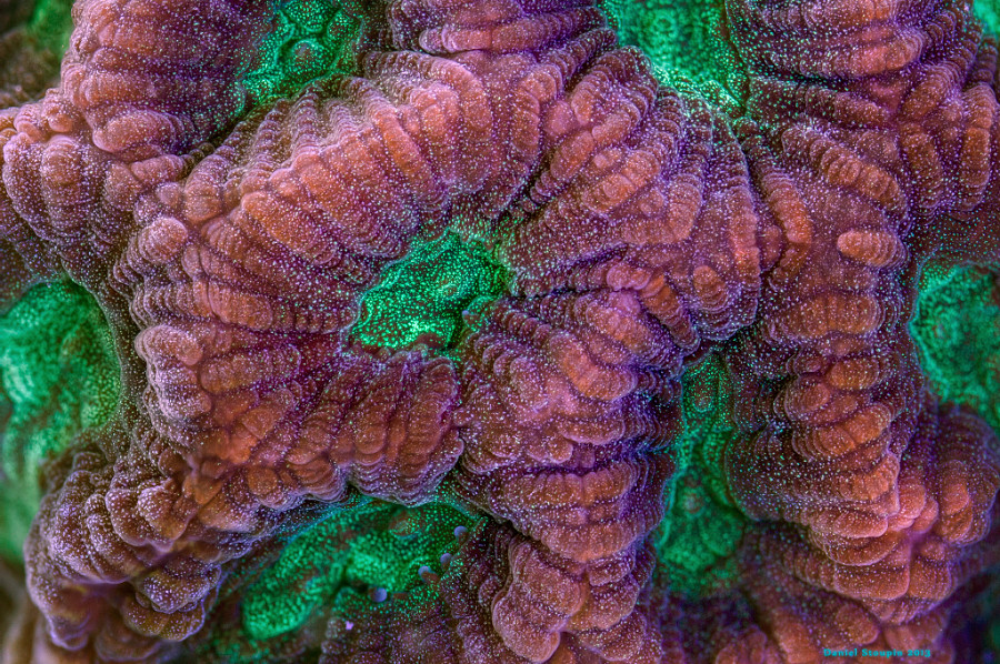 A surface of a coral under high magnification