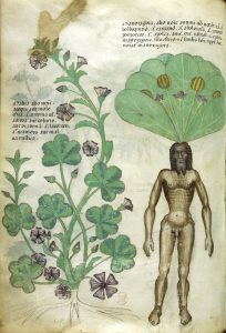 "An old illustration that really puts the ""man"" in ""mandrake"""